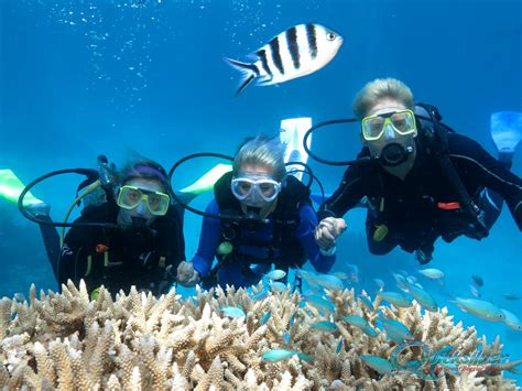 diving douglas diving on the great barrier reef scuba dive cairns and