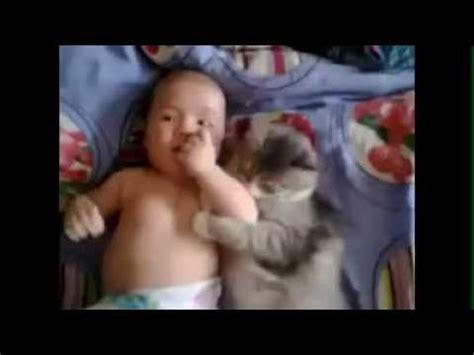 Bayi Kucing Aksi Bayi Kucing Yang Amat Selesa Comel