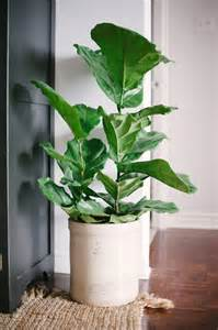 large indoor plants loving pretty house plants the sweetest occasion