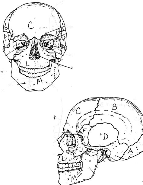 free coloring pages of anatomy skull