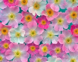 flowers blooming beautiful nature blooming flowers