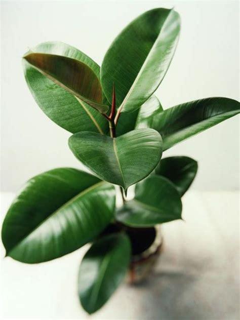 Tolle Zimmerpflanzen tolle zimmerpflanzen ideen f 252 rs zuhause zimmerpflanzen