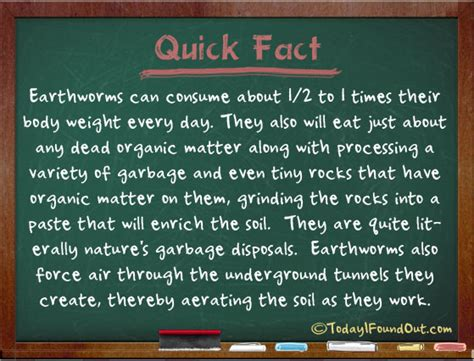 Pantry Shelf Grawn Mi by Earthworm Facts Information About Worms 28 Images