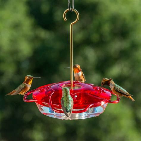 40 awesome hummingbird feeders for garden and patio