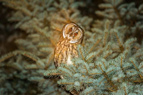 wallpaper owl cute animals funny animals