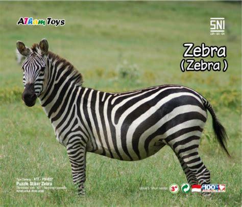 Mainan Edukatif Puzzle Kayu Gambar Zebra puzzle stiker 17x20 zebra mainan kayu