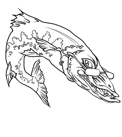 barracuda fish coloring page barracuda coloring pages coloring pages