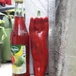 Biji Benih Sayuran Cabe Besar Landung Isi 150 benih paprika sweet italian 5 biji non retail bibitbunga