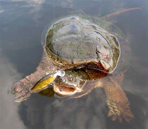 Turtle Fishing Lure fishing lures