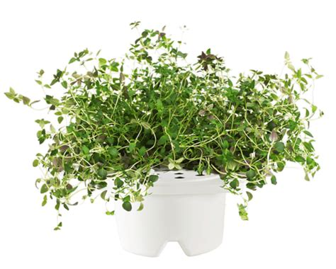 Click And Grow Refills thyme refill for smart flowerbed click amp grow