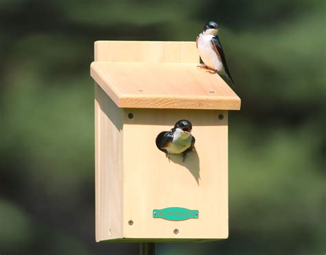 house birds tree swallow birdhouse plans image mag