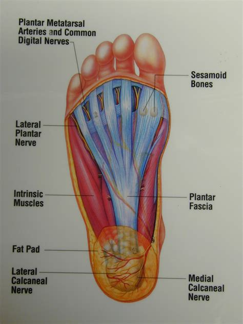 Bottom Middle Foot Burning From Detoxing by Don T Let Plantar Fasciitis Cause You After A