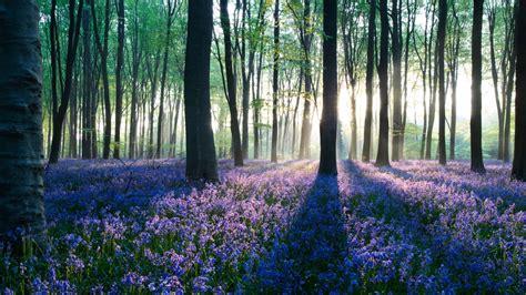 fiori bellissimi sfondi sfondo quot paesaggi bellissimi fiori nei boschi quot 1366 x 768