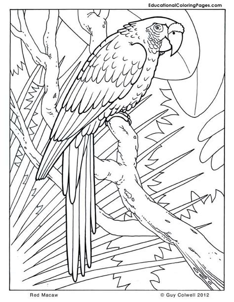 macaw coloring pages birds coloring rainforest animals