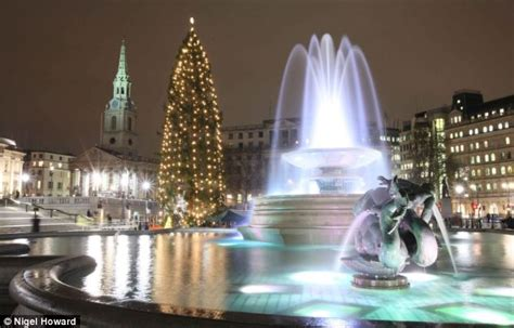what time do they light the tree trafalgar square spectacular tree will use 600 bulbs daily mail
