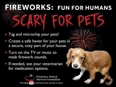 dogs and fireworks fireworks for humans scary for pets claycord claycord