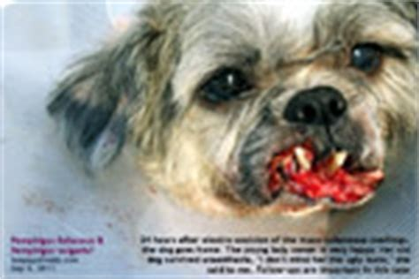 my shih tzu has bad breath veterinary medicine surgery singapore toa payoh vets dogs cats rabbits guinea