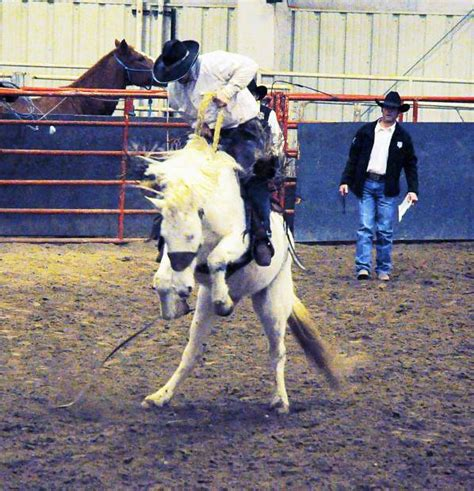 horses that buck the story of chion bronc rider bill smith the western legacies series books bronc bash bucks cabin fever tsln