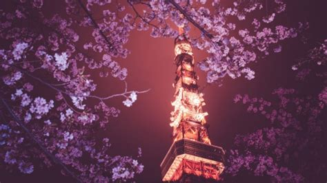 full hd wallpaper tower sakura tokyo night desktop