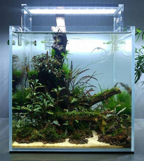 fish tank aquascape designs 894 best images about aquarium fish tank aquascape