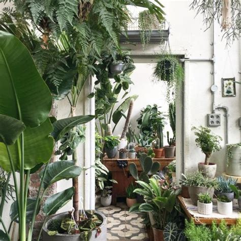 home lovers why indoor plants are a must for interior lovers london