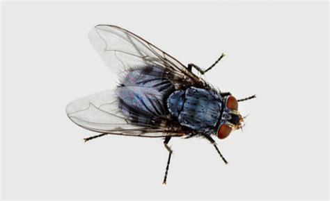 insetti volanti controllo insetti volanti