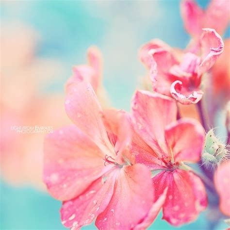 Image Gallery Light Pink Flowers Light Flowers