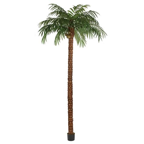 15 Foot Tree - 15 foot coconut palm tree potted p 150630 autograph