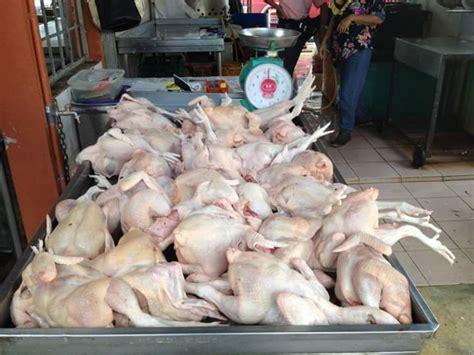 Pasaran Bibit Ayam Potong harga ayam potong melonjak tajam pedoman bengkulu