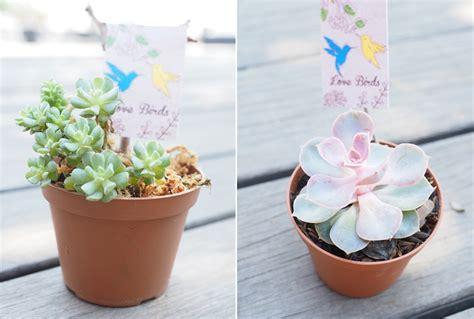 Baskom Wedding Cina Kaleng Unik jenis tumbuhan yang mudah dirawat untuk souvenir weddingku
