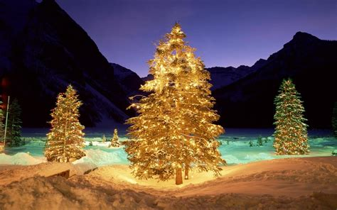 christmas tree 2016 wallpapers pics pictures images