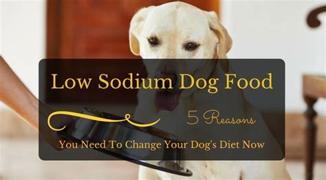 low sodium dogs low sodium food 5 reasons you need to change your s diet now hi5dog