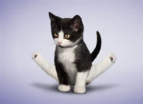 google images of cats yoga cats google search cat party cats pinterest