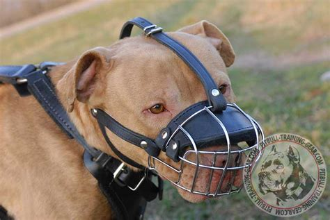 muzzle for pitbull order adjustable wire basket pitbull muzzle walking