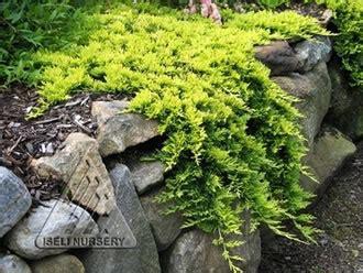 Rok Zahara Lime by Rekonstrukce Zahrad Zuzana Blažkov 225