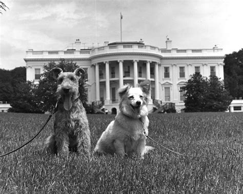 white house dogs kn 18294 white house dogs quot quot and quot pushinka quot f kennedy presidential