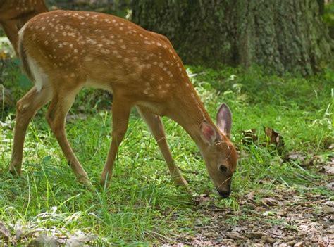Garden Ridge Animal Blue Ridge U S National Park Service