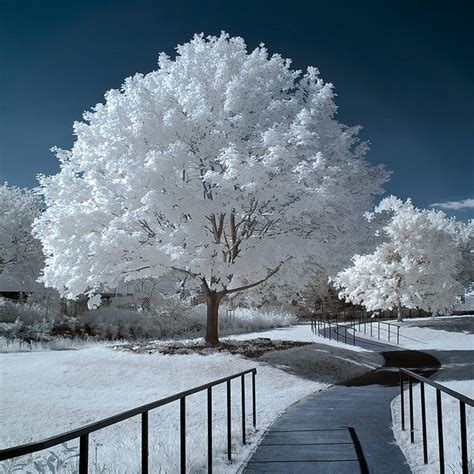 winter snow path trees white nature