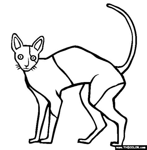 hairless cat coloring page sphynx cat coloring page sketch coloring page