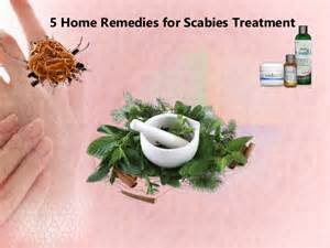 how to treat scabies at home 5 home remedies for scabies treatment