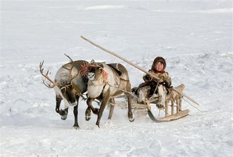 where to buy a sled and reindeer for the roof of your house 96 best nenets images on