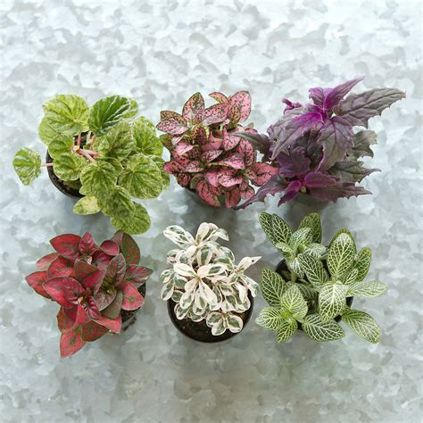 plants that thrive in low light terrarium plant collection low tropical plants
