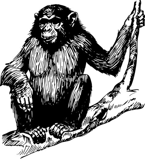 ape clipart free vector graphic gorilla ape animal mammal tree