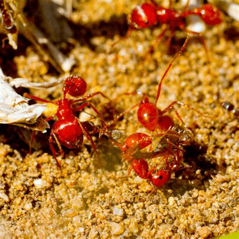 how to get rid of ants in my bedroom how to get rid of carpenter ants how to get rid of stuff