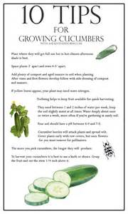 gardening types 10 tips for growing cucumbers a healthy for me