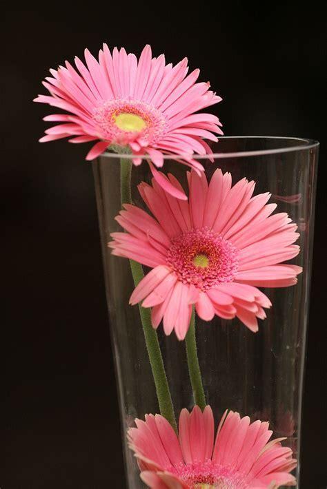 pink gerber daisy centerpiece   Wedding Details