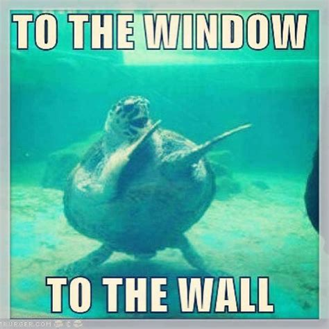 To The Window To The Wall Meme - dancing turtle d s stuff pinterest