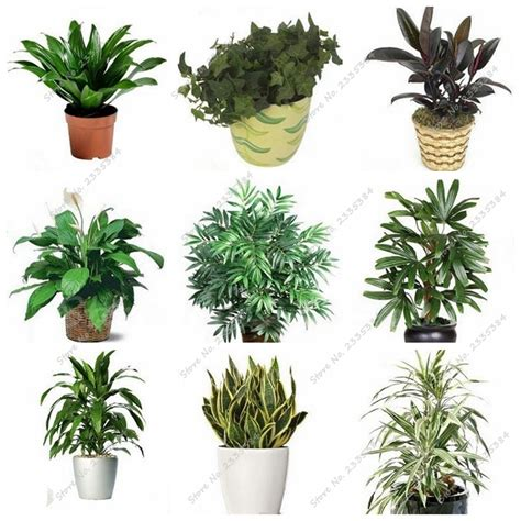 cheap indoor plants online get cheap office plants aliexpress com alibaba group