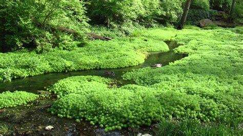 gentle stream 1 11 hours gentle rivers streams