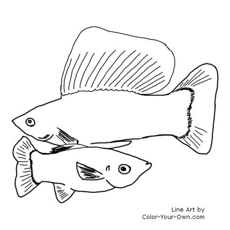 free freshwater fish coloring pages